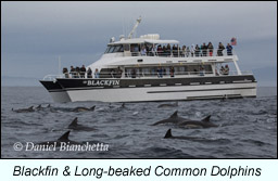 Monterey bay boat charters whale watching seabird trips for Monterey fishing trips